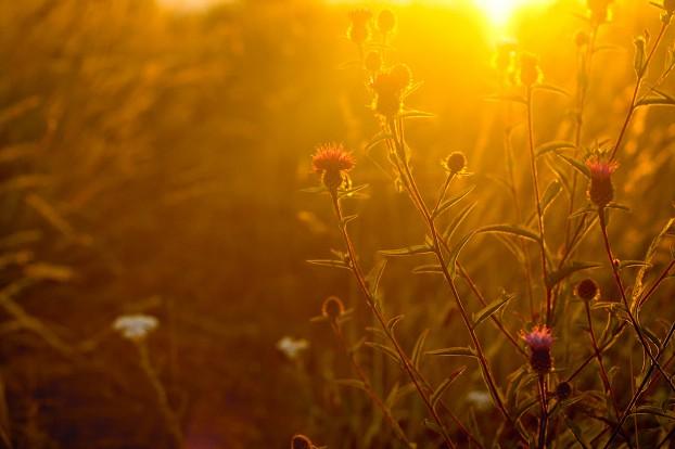 golden-hour-tips1