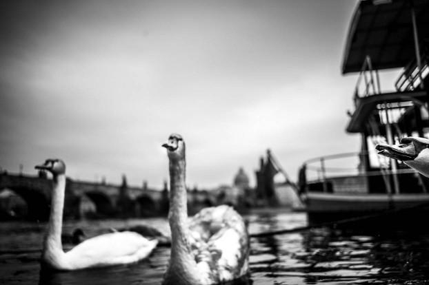 prague-street-photography7