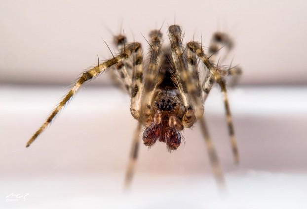 mozdt-spider-stacked