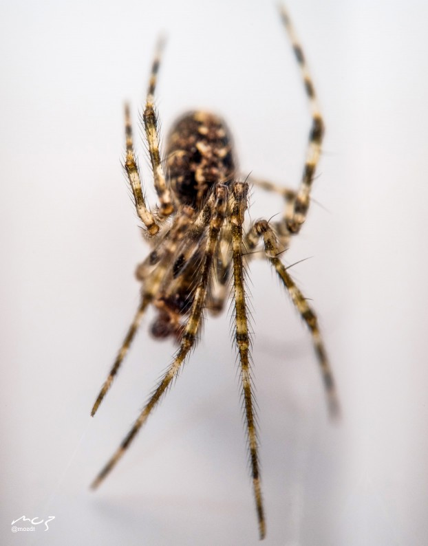 mozdt-spider1