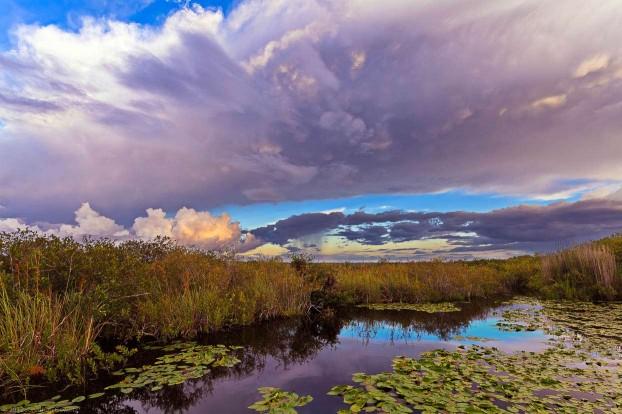florida-everglades-photography7
