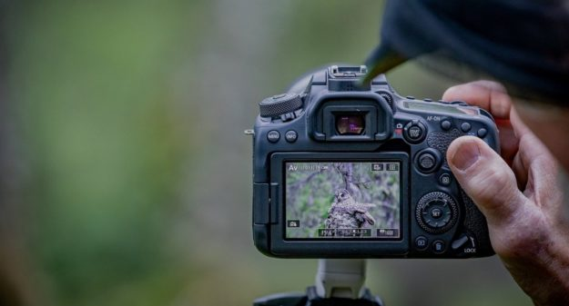 Cameras For Wildlife Photography Reviewed