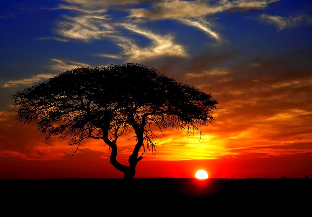 Tree in sunset